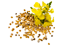 mustard-seed-single-image.png